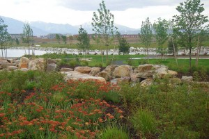 stream plantings