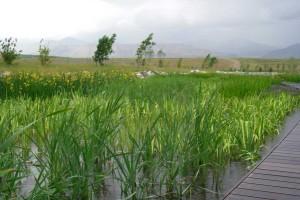 wetland planting design