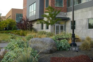 dogwoods and ornamental grasses