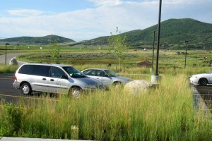 native grasses in parking lot