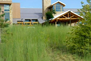 Park City native landscape design