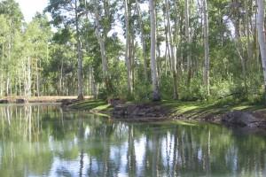 naturalistic pond