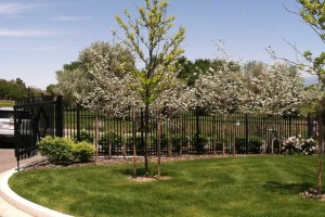 ornamental flowering trees