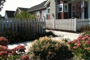 white picket fence and perennial color