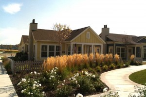 repetition of color in landscape design