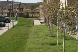 native grass adjacent to bluegrass