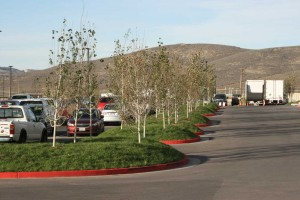 bermed parking islands with low water use native grass