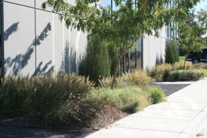 Planting design that plays with texture